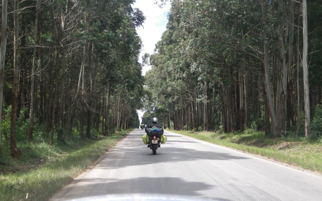 Tanzanian forests